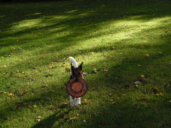 Duke et son freesbee...