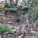 le merle attend que les mésanges fassent tomber des graines...