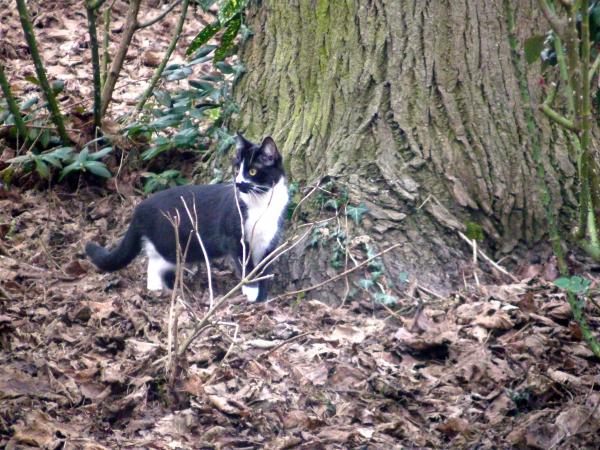 le chat attend le merle qui attend...