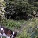 dans mon petit jardin...