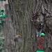 la mésange et le rouge-gorge se disputent le territoire !