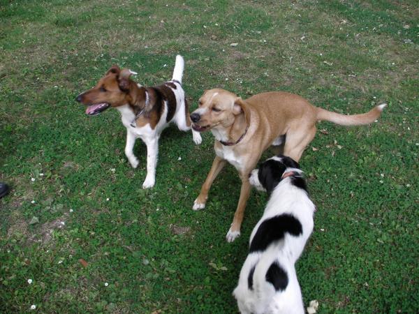Duke, Toby et Bella...