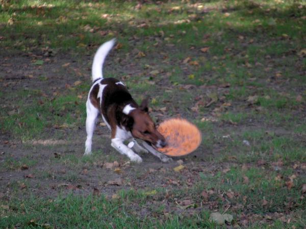 Touchez-pas au... freesbee !!!